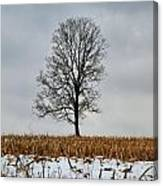 Lone Tree In Winter Canvas Print