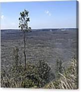 Lone Tree Kilauea Crater Canvas Print