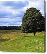 Lone Tree On Grassy Knoll Canvas Print
