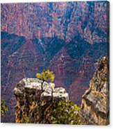 Lone Tree On Outcrop Grand Canyon Canvas Print