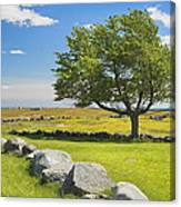 Lone Tree With Blue Sky In Blueberry Field Maine Canvas Print