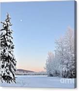 Lone Winter Spruce - Alaska Canvas Print