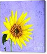 Lone Yellow Daisy Canvas Print