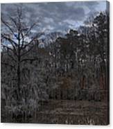 Lonely Bald Cypress Canvas Print