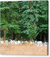 Lonely Graveyard Under Pine Trees Canvas Print