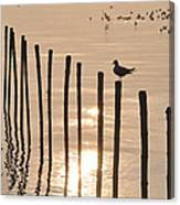 Lonely Gull Canvas Print