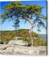 Lonely Lonesome Pine Canvas Print