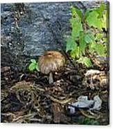 Lonely Mushroom Canvas Print