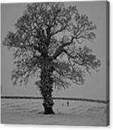 Lonely Oak Canvas Print