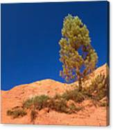 Lonely Pine On The Ocher Hill Canvas Print