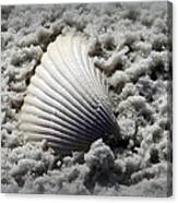 Lonely Shell Canvas Print