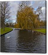 Lonely Swan Canvas Print