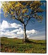 Lonely Tree In Mountain Canvas Print