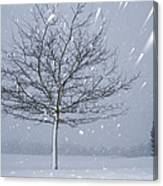 Lonely Tree In Snow Bavaria Canvas Print