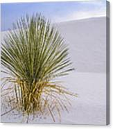 Lonely Yucca Plant In White Sands Canvas Print