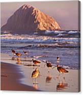 Long Billed Curlew - Morro Rock Canvas Print