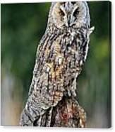 Long-eared Owl 4 Canvas Print