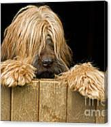 Long-haired Dog Canvas Print