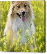 Long Haired Mixed Breed Canvas Print