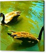 Long Neck Ducks Canvas Print
