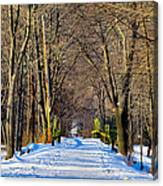 Long Path Ahead Canvas Print