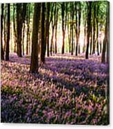 Long Shadows In Bluebell Woods Canvas Print