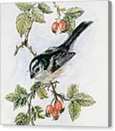 Long Tailed Tit And Rosehips Canvas Print