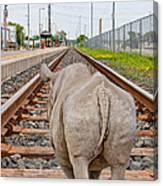 Rhino On A Railway Track Canvas Print