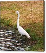 Long White Strides Canvas Print