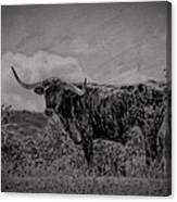 Longhorn Of Bandera Canvas Print