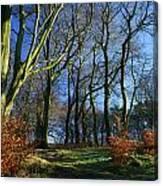 Longshaw Woods Canvas Print