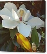 Longue Vue Magnolia Canvas Print