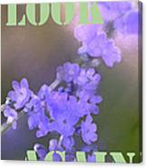 Look Again Canvas Print