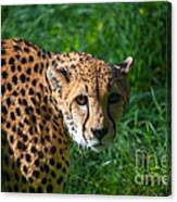 Look Of The Hunter Canvas Print