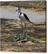 Look Out For That Egret- Mother Stilt Said Canvas Print