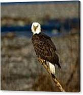 Look Out Perch Canvas Print