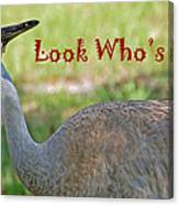 Look Who's 50 Canvas Print