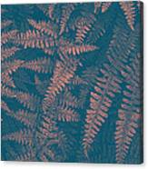 Looking At Ferns Another Way Canvas Print