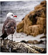 Looking For Dinner Canvas Print