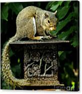 Looking For Nuts Canvas Print