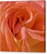 Looking Good Rose Canvas Print