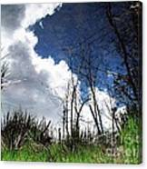 Looking Into The Bog Canvas Print