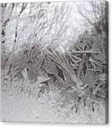 Looking Through The Frost Iv Canvas Print