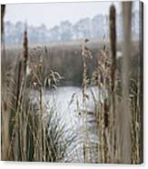 Looking Through The Reeds Canvas Print