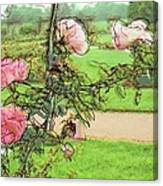 Looking Through The Rose Vine Canvas Print