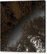 Looking Up Through Copper Forest Canvas Print