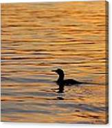Loon At Sunset 6958 Canvas Print