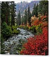 Loon Creek In Fall Colors Canvas Print