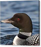 Loon Canvas Print