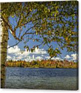 Loon Lake In Autumn With White Birch Tree Canvas Print